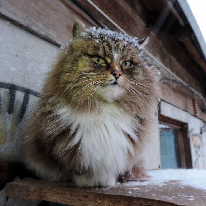 gato con nieve
