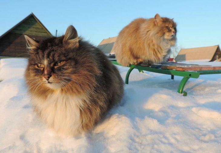gatos en nieve