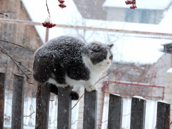 gato cerca