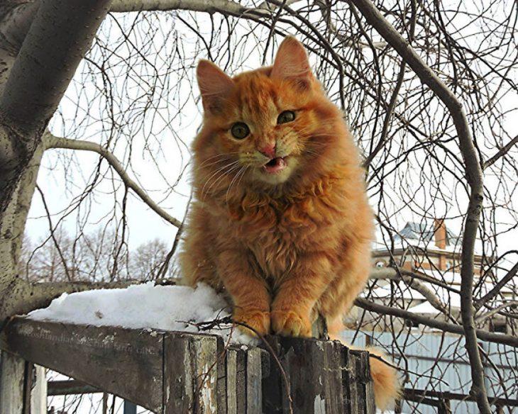 gato viendo a la càmara