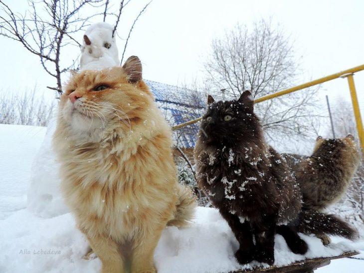 gatos postal