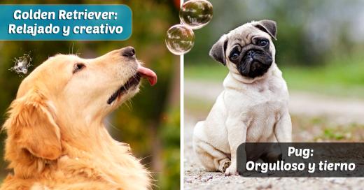 Lo que los perros dicen de ti