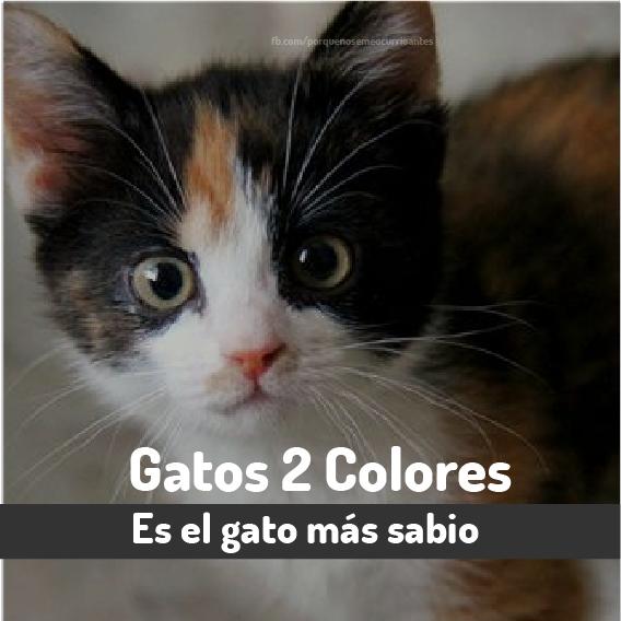 2 colores