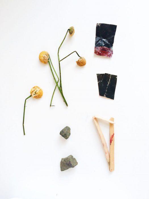 plantas y paples