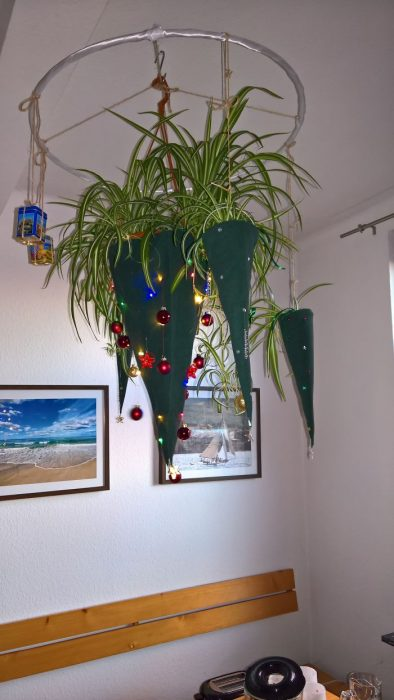 arbol navideñoplantas