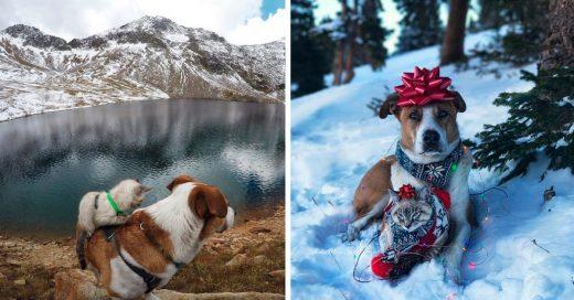 Cover perro y gato son mejores amigos de viaje