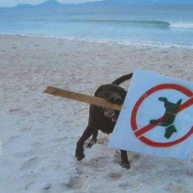perro anarquista