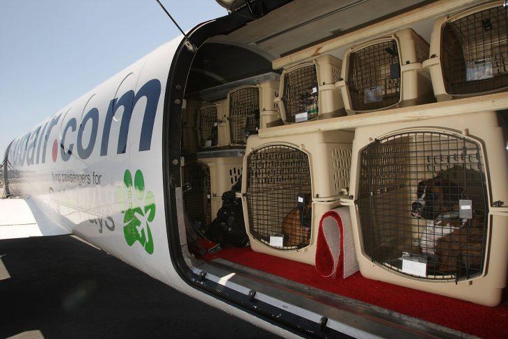 animales en un avión