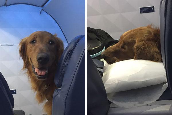 perrito avión