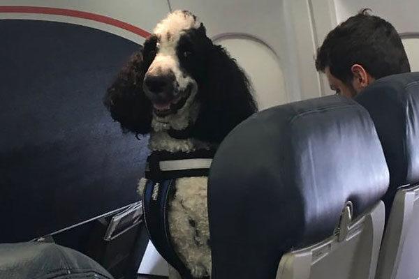 perrito feliz avión
