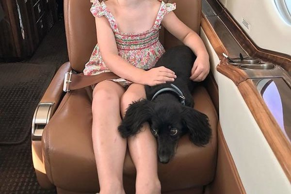 perrito en avión