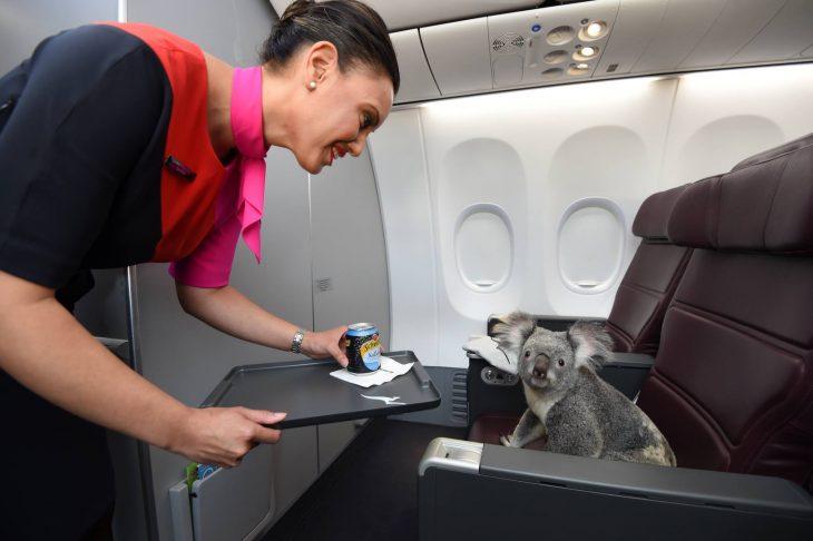 koala avión