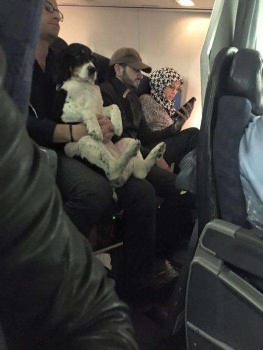 perrito en el avión