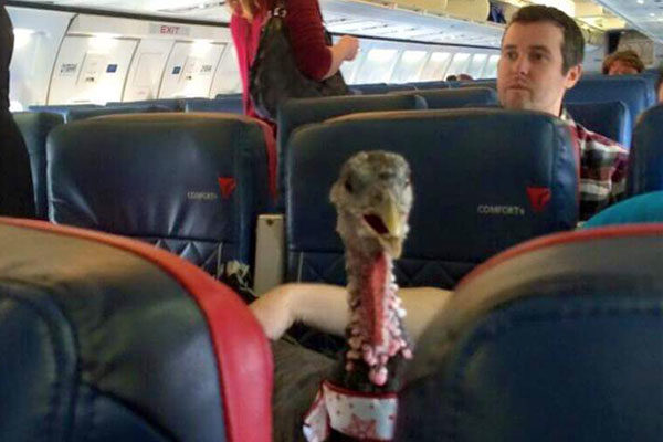 ganzo en un avión