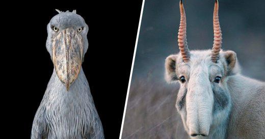 Cover Sorprendentes animales que pronto dejarémos de ver