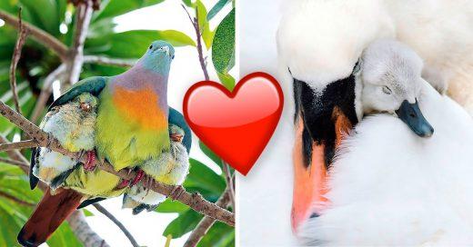 Cover Amorosas madres repletas de plumas que te enternecerán