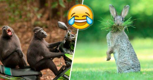 Cover las fotos más divertidas de los animales