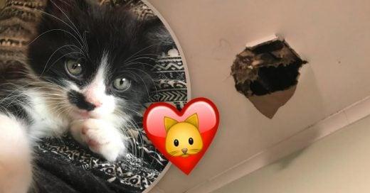 Cover Este gatito le cayó del cielo y le tomó 10 segundos adoptarlo