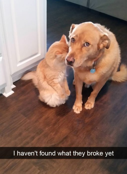 gto y perro