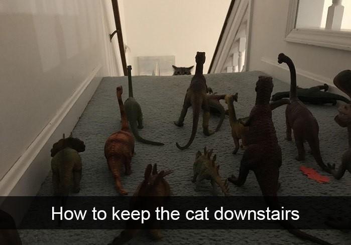 gato escaleras