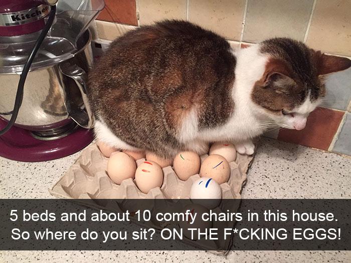gato huevos