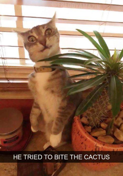 gato cactus