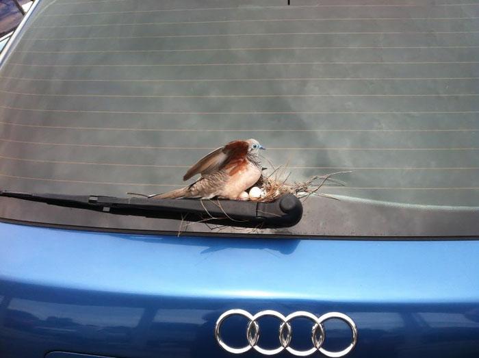 Aves cuidando de sus bebés