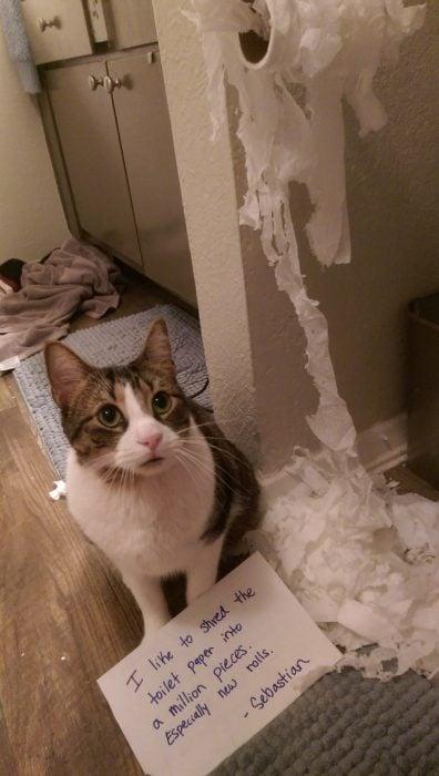 gato papel