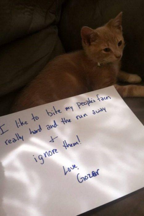 gato mordelon