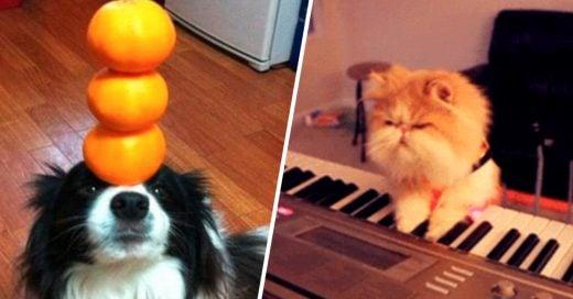 Cover Animales con talentos impresionantes, sin duda podemos aprender de ellos