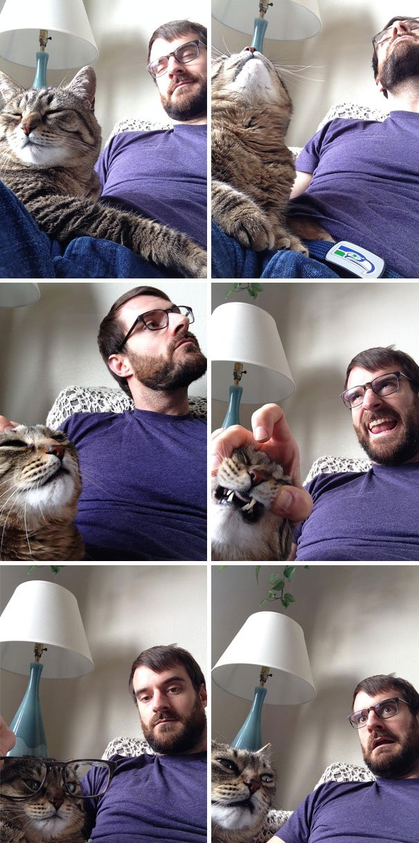 gato esposo