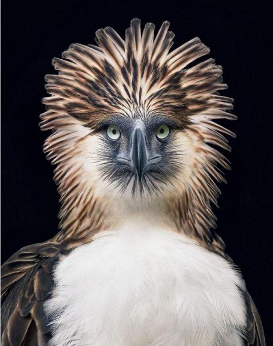 Fotógrafo toma imágenes de animales en peligro de extinción