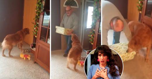 Cover Adorable perro se sentía muy solo desde que murió su hermano