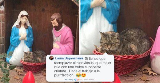Cover La gente no puede parar de reír con este gato que se coló a un pesebre en Nueva York