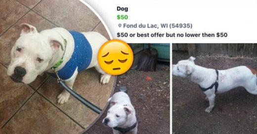 Cover Ve una herida debajo del arnés de su perro; envía al antiguo propietario abusivo a la cárcel