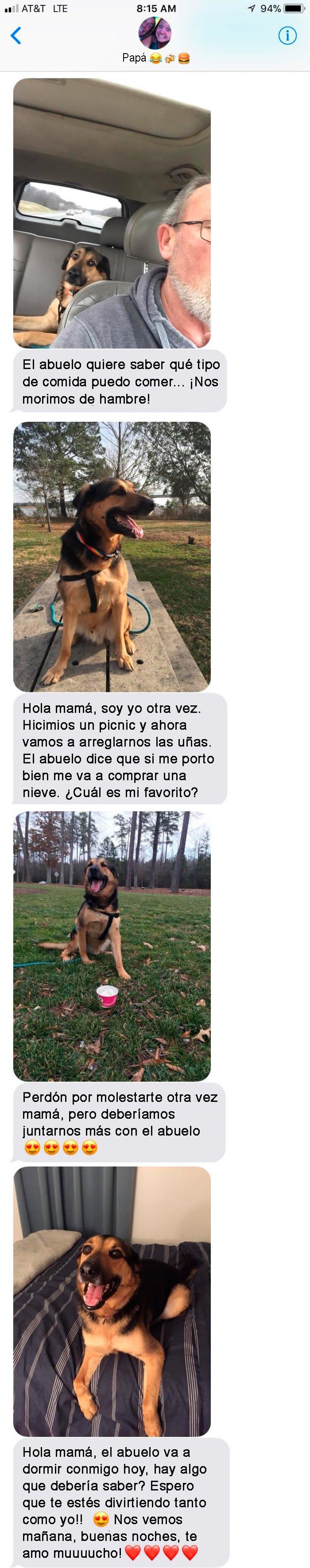mensajes perro