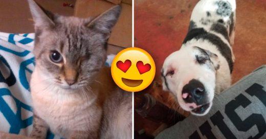 Cover mascotas ''no perfectas'' que nos derriten el corazón