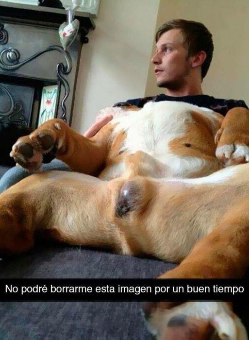 perro cuerpo