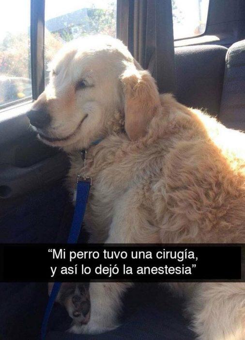 perro anestesia cirugía