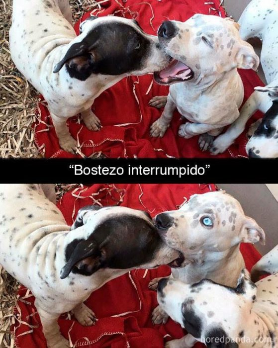 bostezo interrumpido
