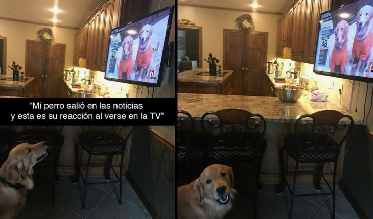 perro televisión