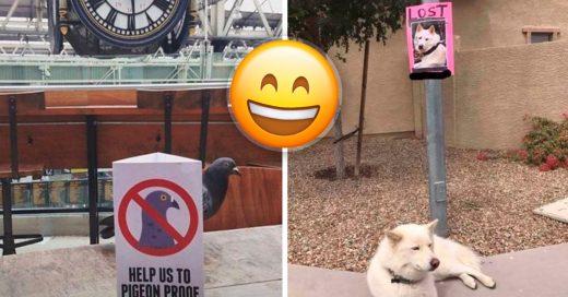 Cover animales que no respetan las reglas