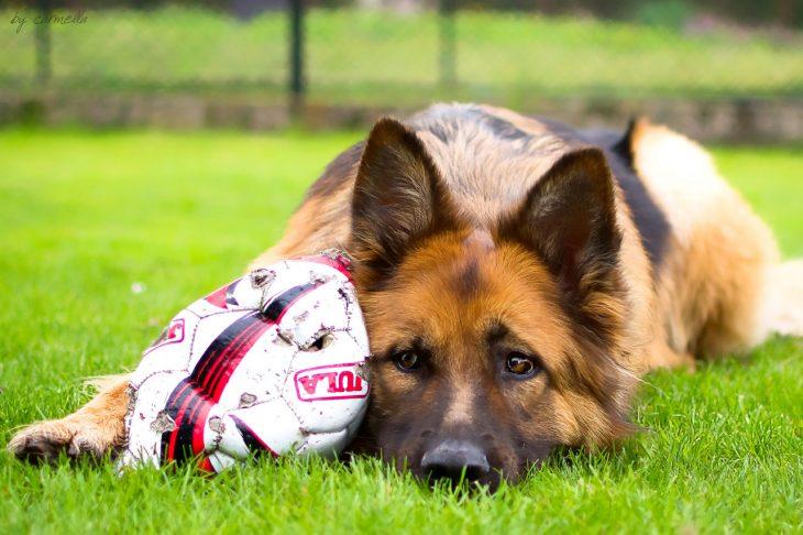 pastor con pelota