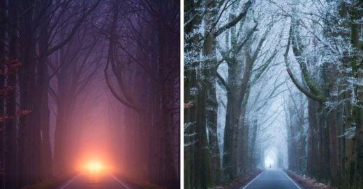 Cover Tomó fotografías del mismo lugar en diferentes estaciones del año