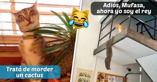 snapchats de gatos divertidas