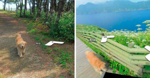 Cover Este perrito fue el mejor guía para el sujeto de Street View