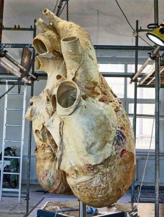 corazon ballena