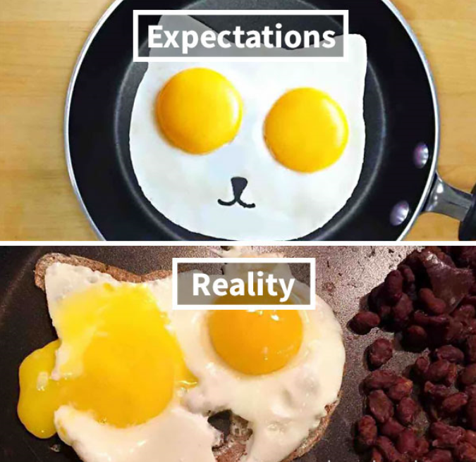 huevos gato