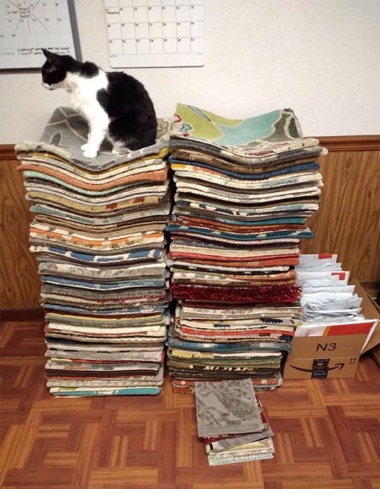 Gatos y alfombras