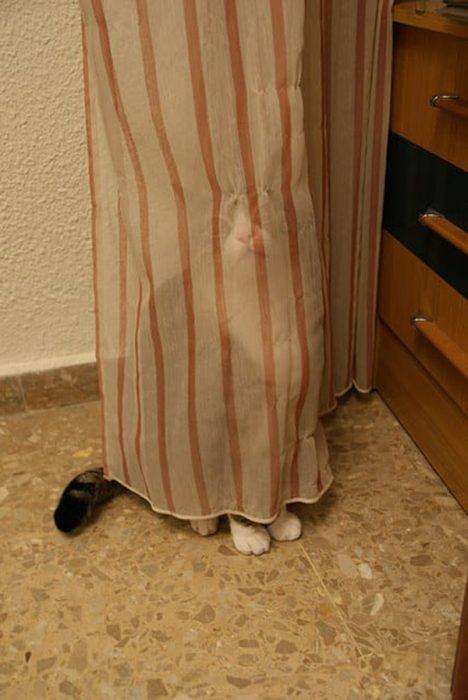 Gato espía